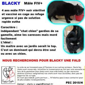 blacky_charly's